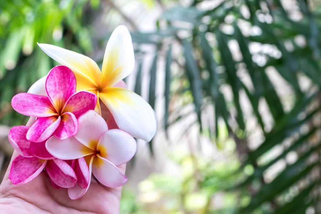 tropische-tuin